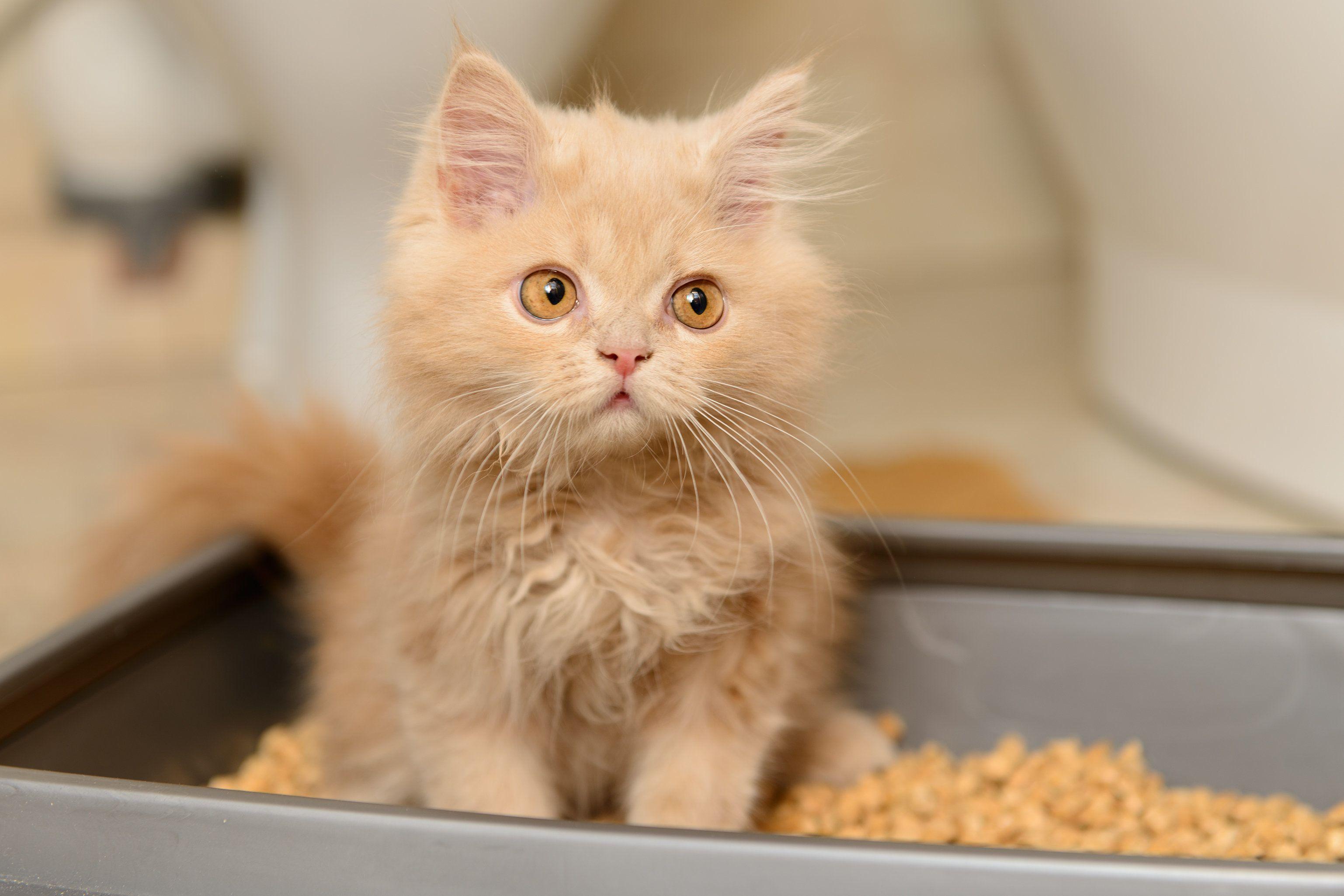 анализы мочи для кошек