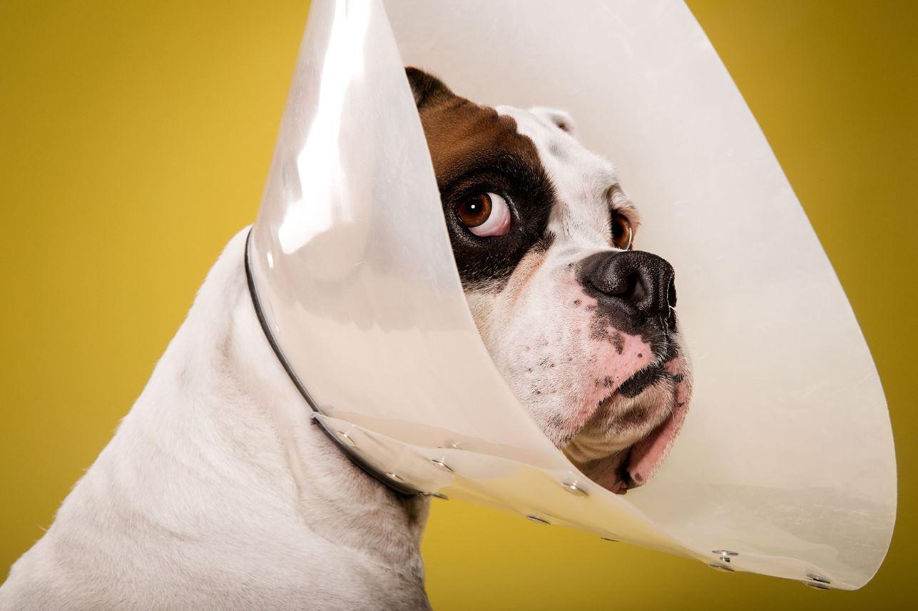 Кастрация собаки в клинике